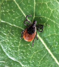 Tick control in Briarcliff Manor, NY