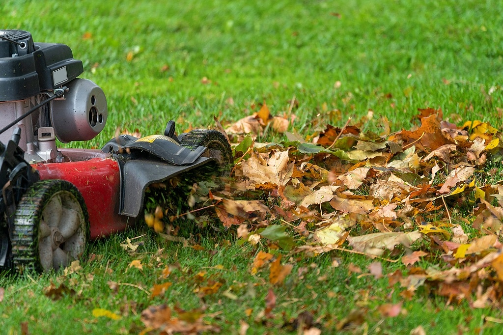Fall Lawn Maintenance Steps